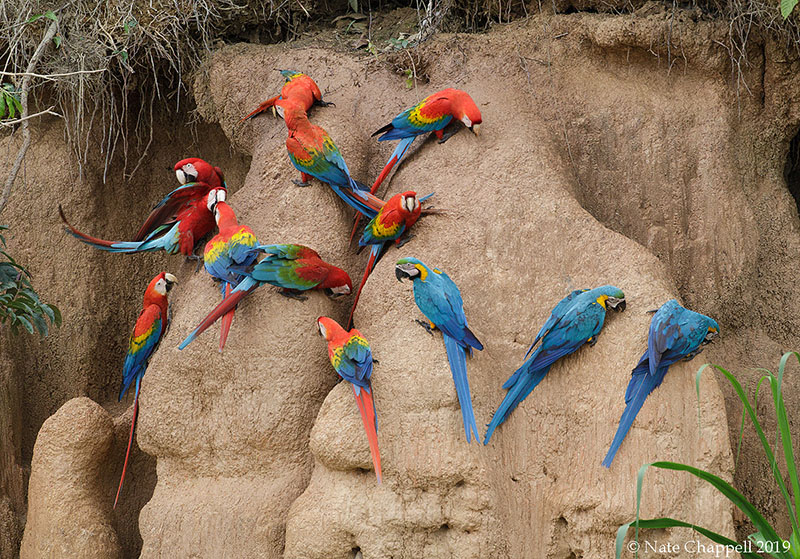 3 Species of Macaw